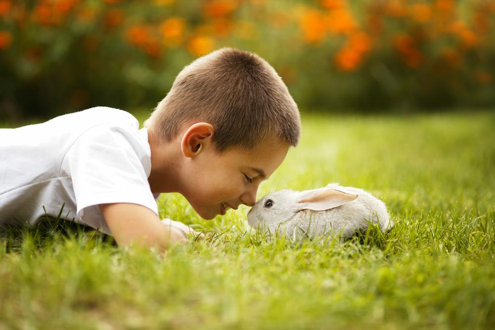 Mascotas fáciles de cuidar